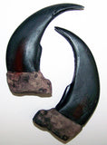 LARGE 3 INCH GRIZZLY BEAR CLAW REPLICAS  ( Sold by the piece or dozen )