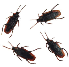 BULK FAKE COCKROACHES (Sold by the dozen)