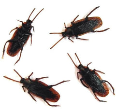 BULK FAKE COCKROACHES (Sold by per 100)