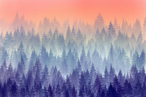 Forest-1 - Backdrop Shop