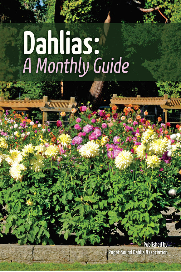 Dahlias: A Monthly Guide