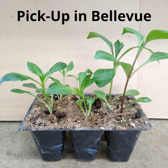 2020 PSDA Seedling Challenge 6-Pack - Bellevue-Area Pick-Up