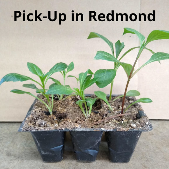 2020 PSDA Seedling Challenge 6-Pack - Redmond-Area Pick-Up