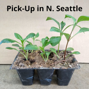 2020 PSDA Seedling Challenge 6-Pack - North Seattle-Area Pick-Up