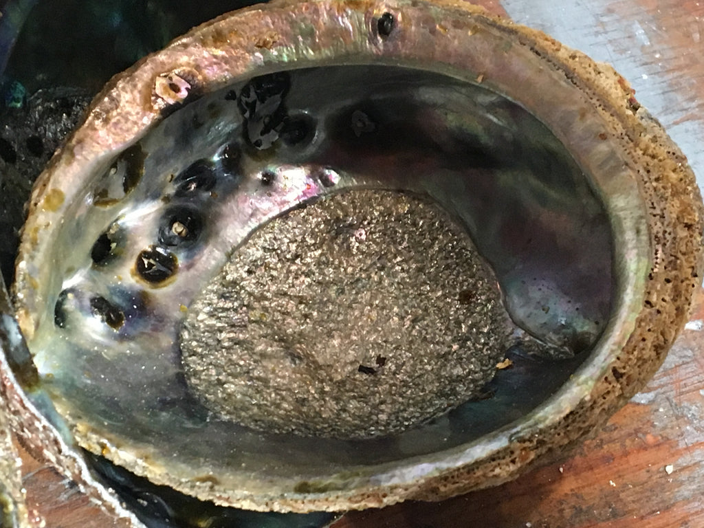 Abalone shell - Natural and ethically harvested