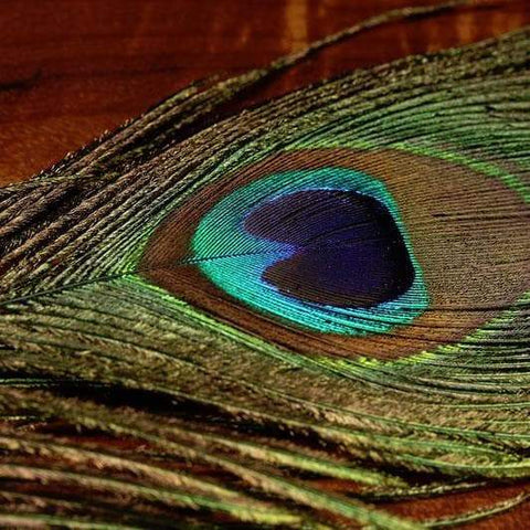 Peacock Eyes - Natural