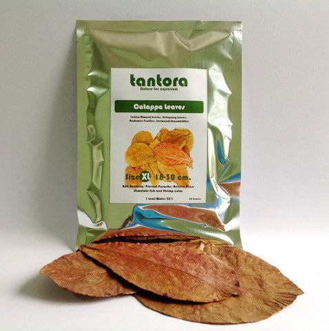 Tantora Catappa Premium Grade Leaves (Extra Large)