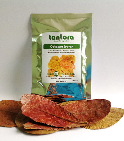 Tantora Catappa Premium Grade Leaves (Medium)