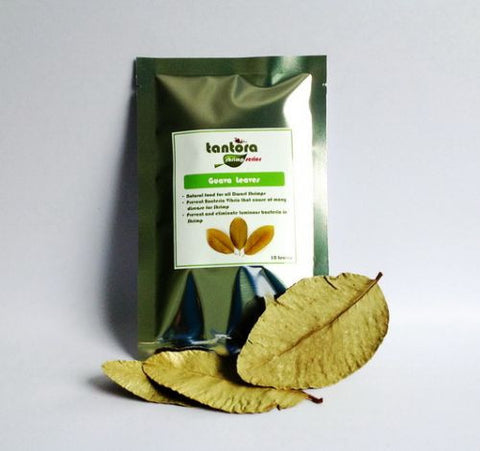 Tantora Guava Leaves - (10 leaves)