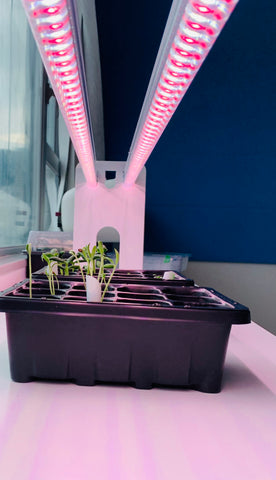grow lights for microgreens
