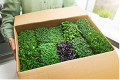 microgreens in a box