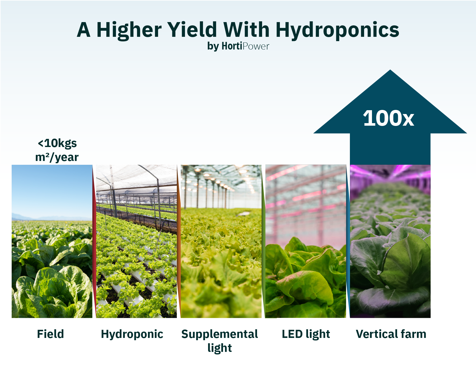 a higher yield with hydroponics and grow light