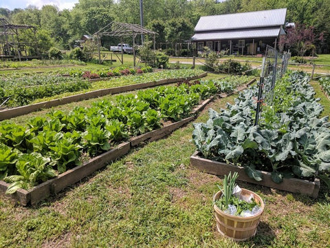 CSA, Farm, Organic, Gardening, Madison Creek Farms