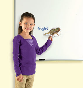 Livssyklus: frosk - store magneter | Learning Resources