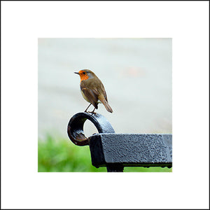 Robin of Riverside Park Greeting Card