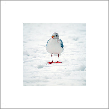 Snow Gull Greeting Card
