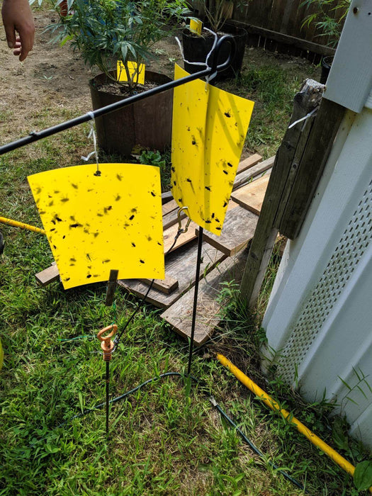 6x8 Inches Dual-Sided Yellow Sticky Traps