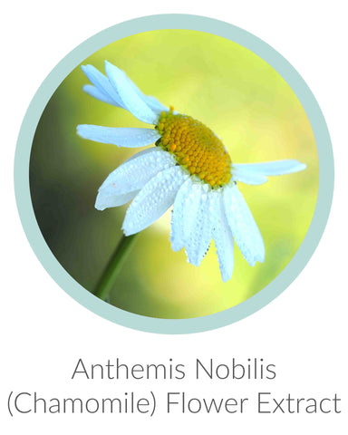Anthemis Nobilis (Chamomile) Flower Extract