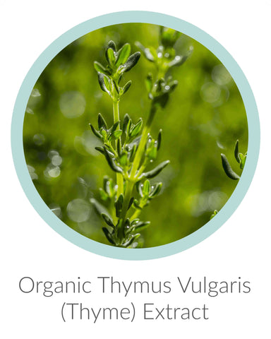 organic thyme extract