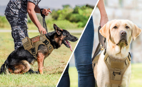 tactical harness for dogs