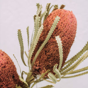 Banksia - dusty rose - lang
