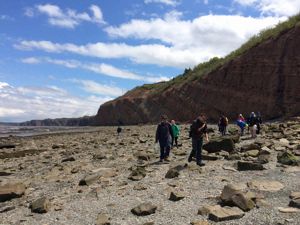 Joggins Fossil Cliff Private Tours