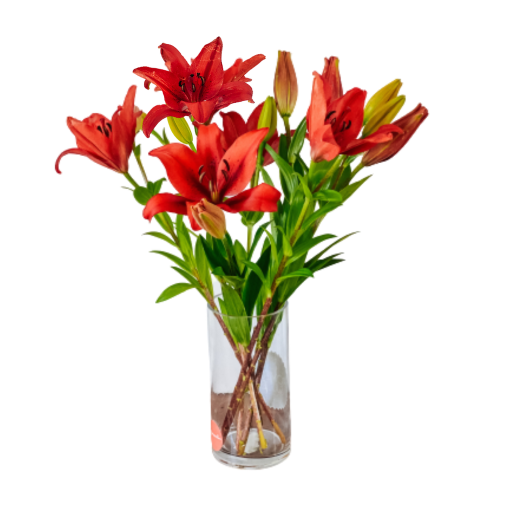 5 Red Lilies