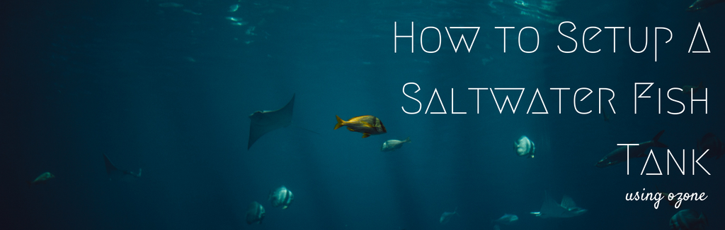 How to Setup a Saltwater Fish Tank Using Ozone
