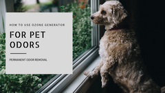 How to Use Ozone Generator for Pet Smells