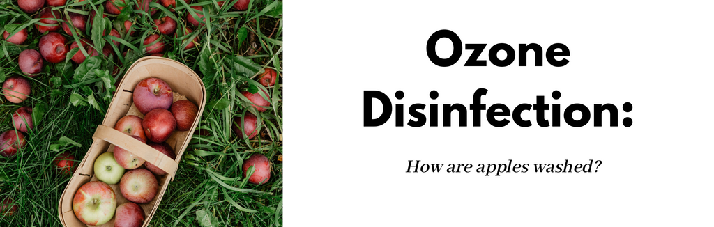 Ozone Disinfection: How Are Apples Washed?
