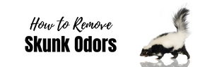 How to Remove Skunk Odors