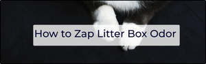 How to Zap Litter Box Odor