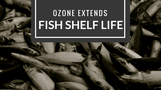 How to Keep Fish Fresh with Ozone Generator