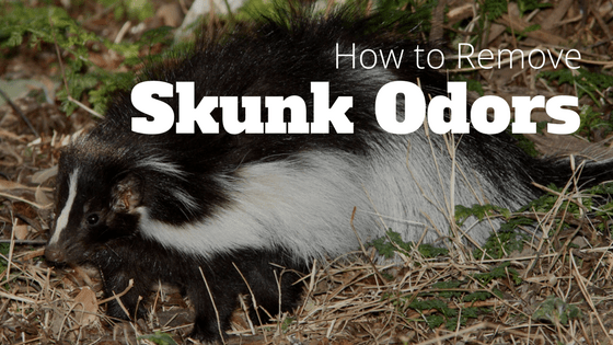 How to Remove Skunk Odors with Ozone Generators