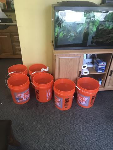 Saltwater Fish Tank Buckets of Water
