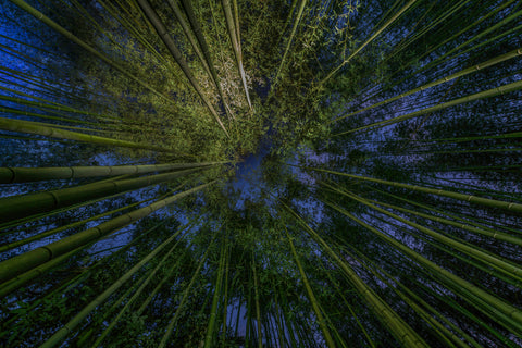 Arashiyama Bamboo Grove Night Kyoto, Japan
