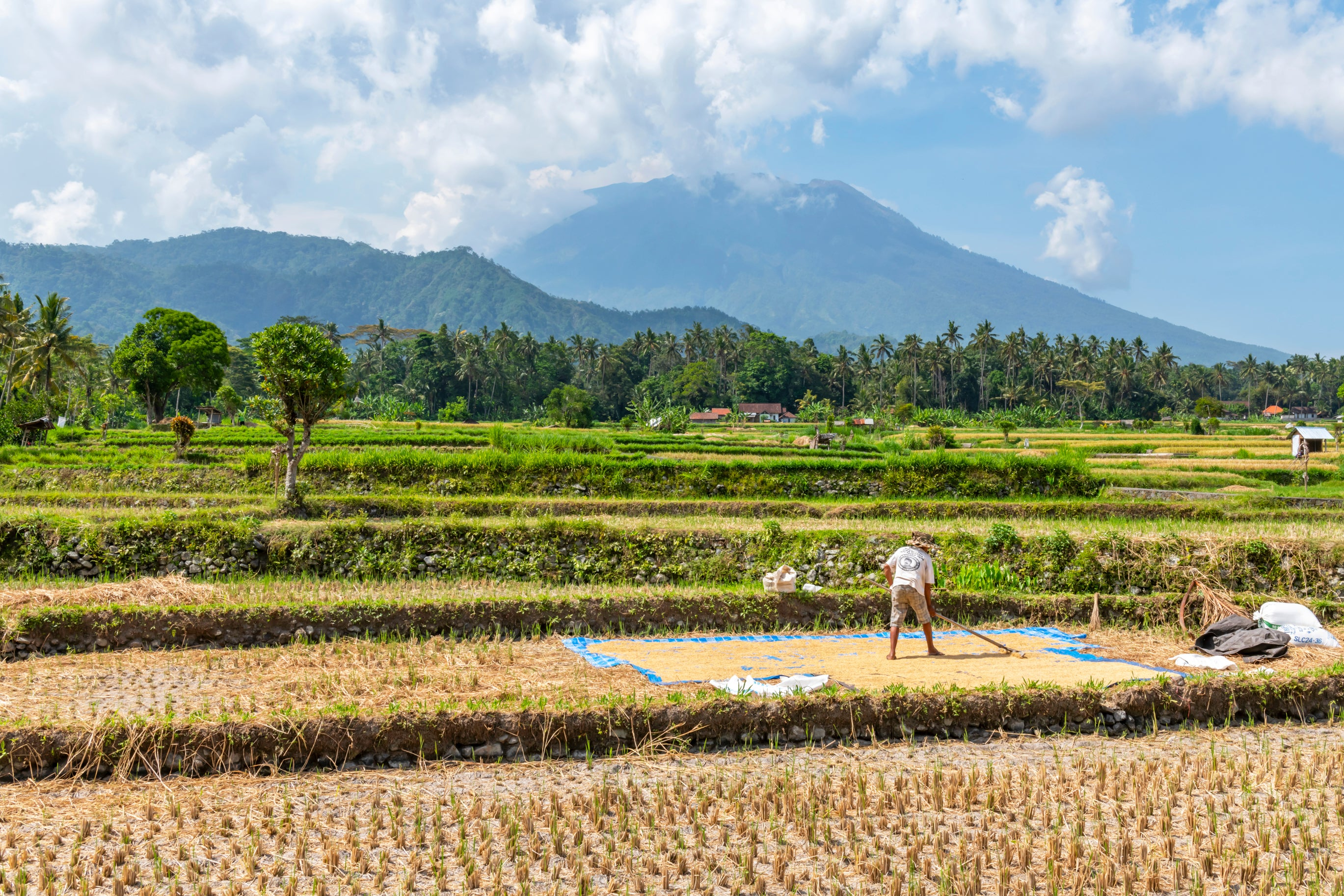 Farmer works on his Bali Rice Fields, Indonesia