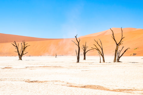 The serene scene in Africa, Namibian dead trees with its three solid colors looks and feels like a dream.