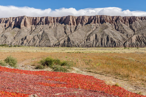 Red peppers drying over Cafayate Argentina mountains