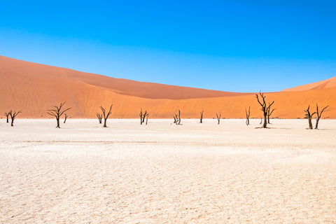 Skeleton Trees in Namibia Africa