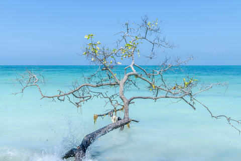 Tree in waters of Colombia, blue skies and aqua water.