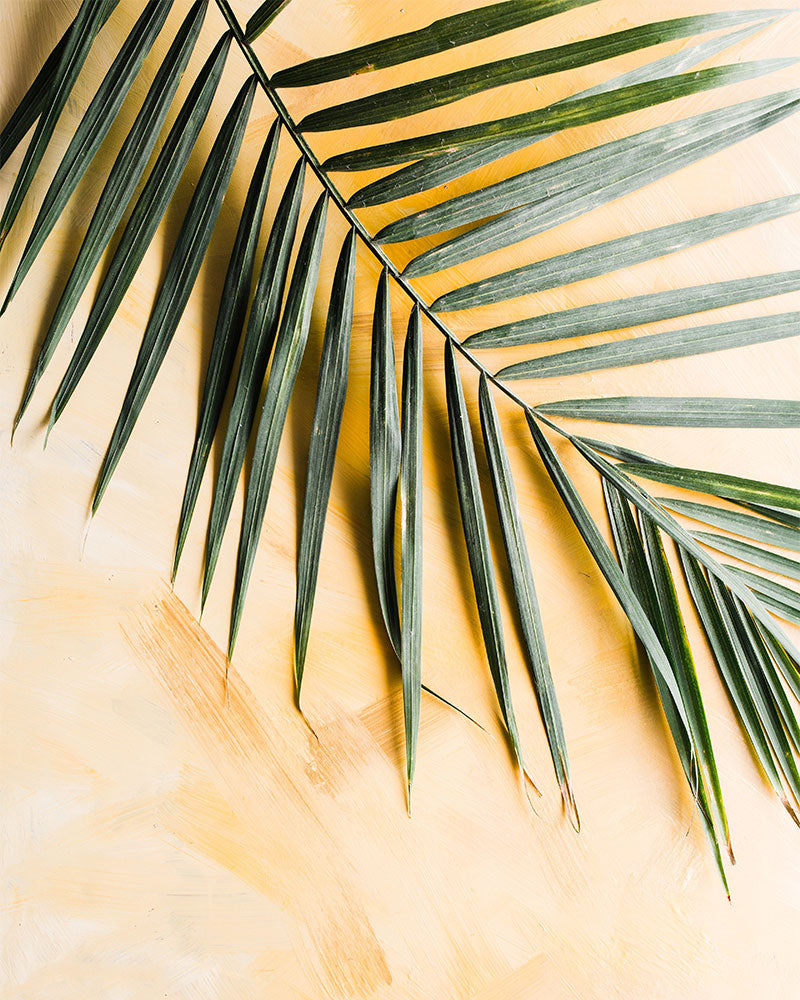 palm-right