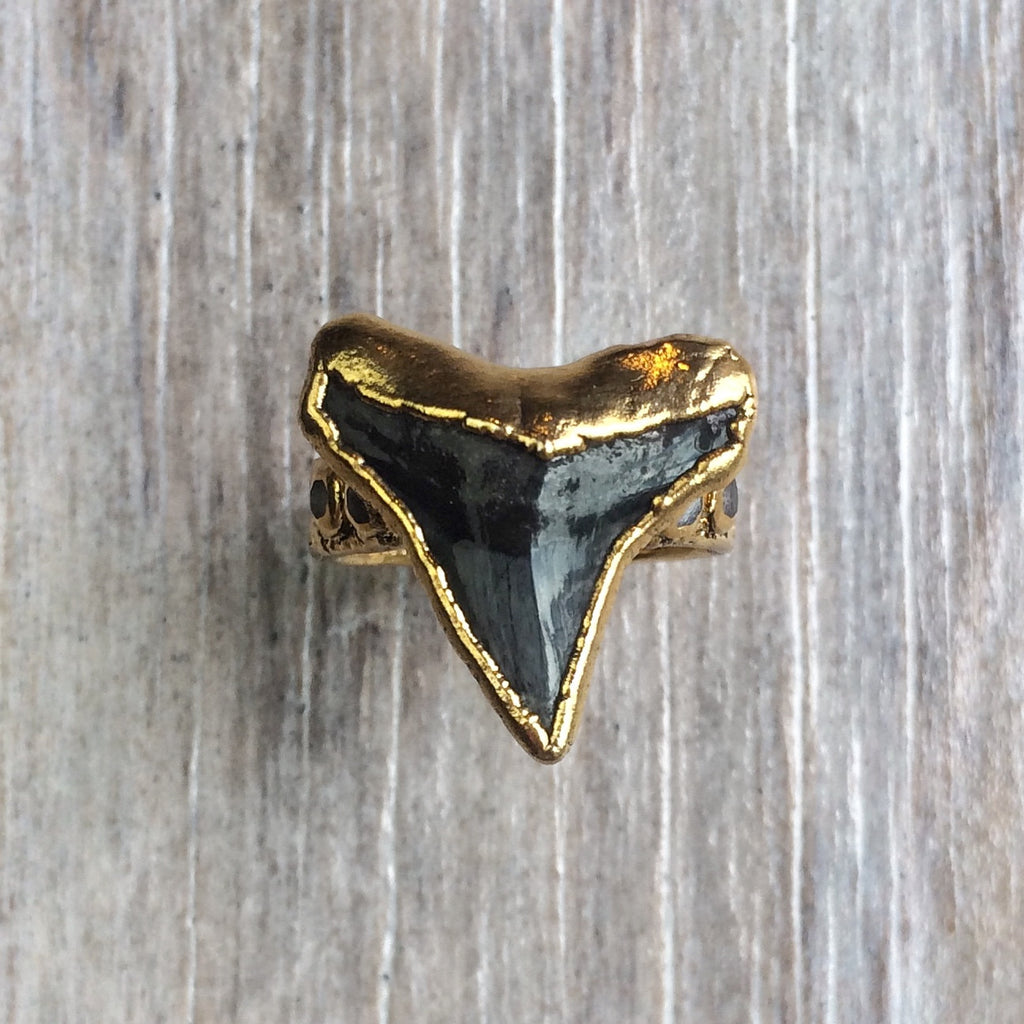 Fossilized Shark Tooth & Moonstone Ring