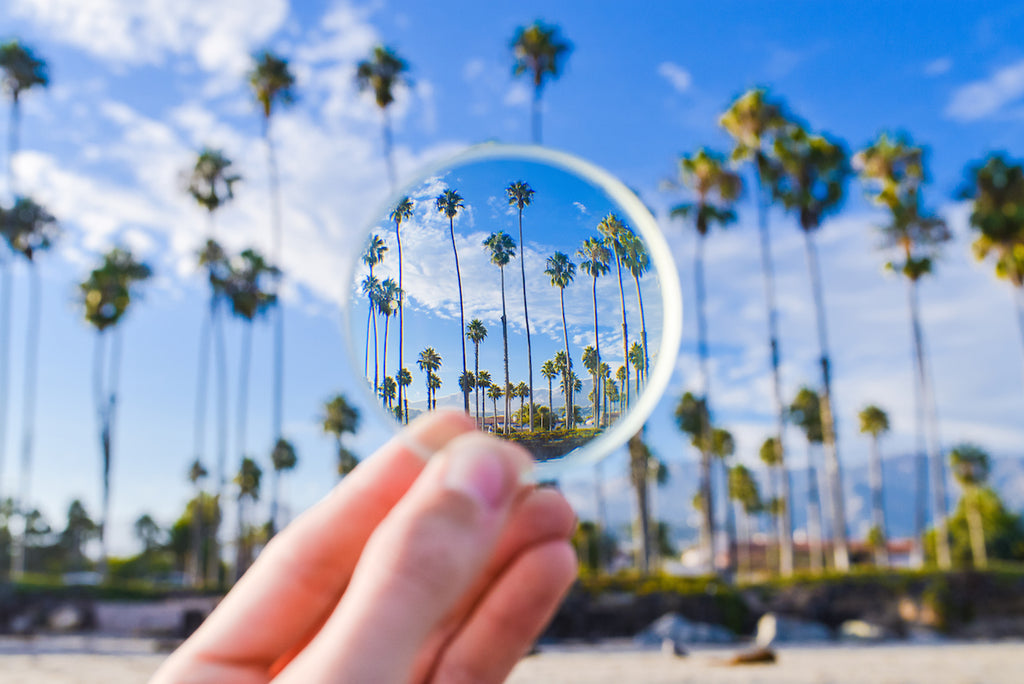 Santa Barbara Palms and Lens // Blake Bronstad Photography
