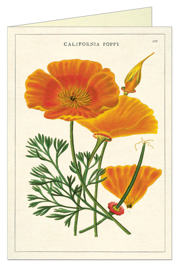 Cavallini California Poppy Greeting Card