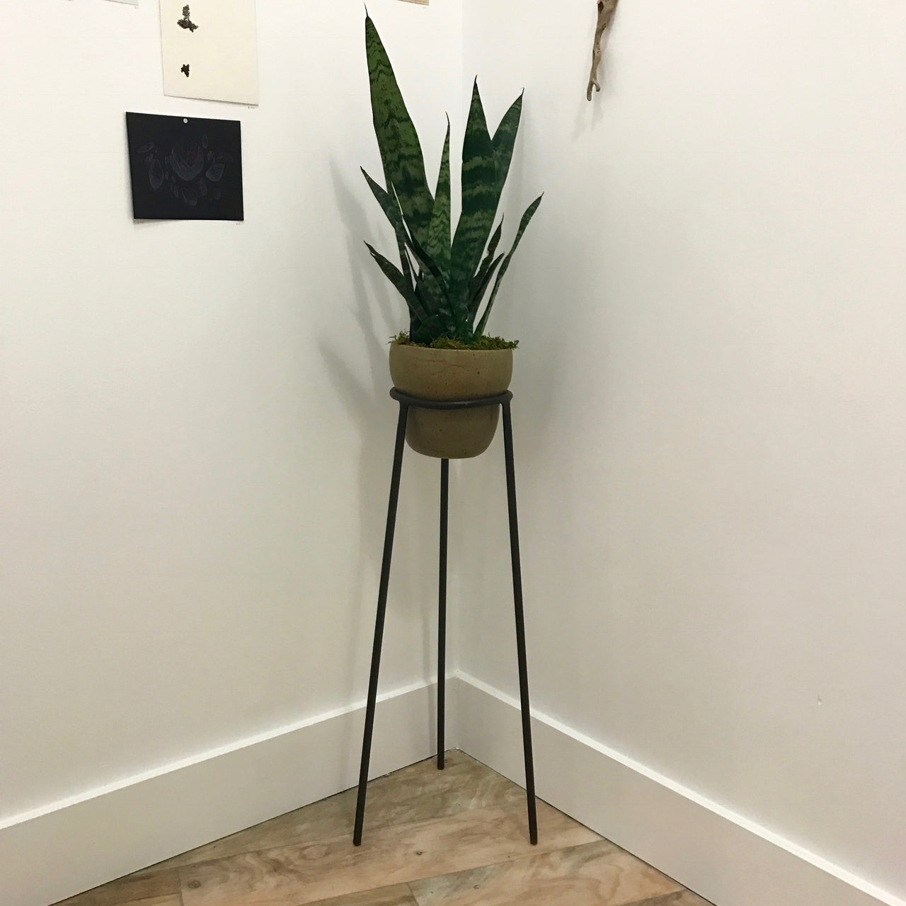 Diana Markessinis - Planter 2