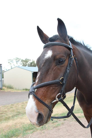 "KPH Grackle Bridle is fancy stitched in white, has quality brass hardware and fleece padded nose piece. Comes with webbing reins with leather rein stops for use with running martingale.  ""KPH Saddlery - high quality products at affordable prices."""