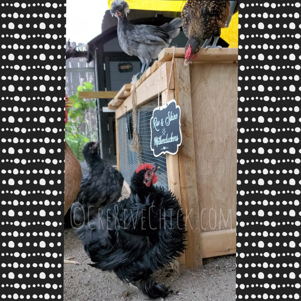 Rise & Shine Mothercluckers chicken coop WOOD SIGN