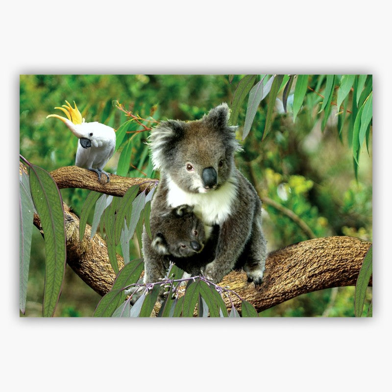 POSTCARD - 3D KOALA WITH BABY AND COCKATOO 44-01-2491.