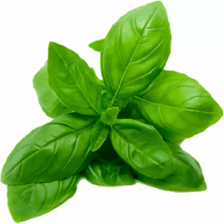 Basil Bunch each